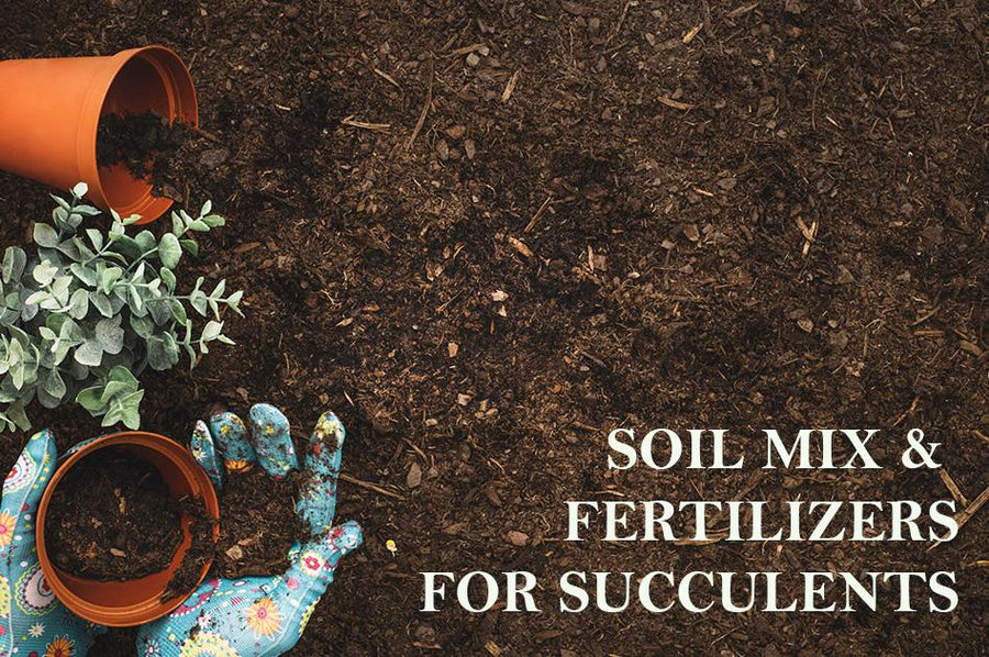Soil Mix & Fertilizers for Succulents