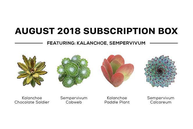 Succulents Box Subscription with Care Guide