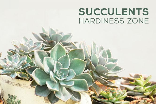 Succulents Hardiness Zone