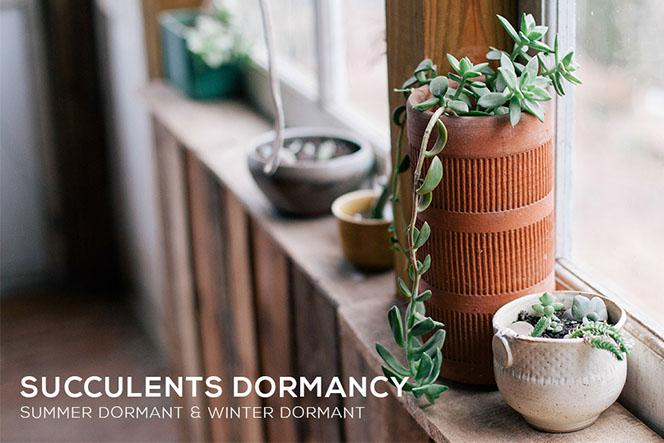 Succulents Dormancy,The Science of Succulent Dormancy, What You Need to Know About Succulent Dormancy
