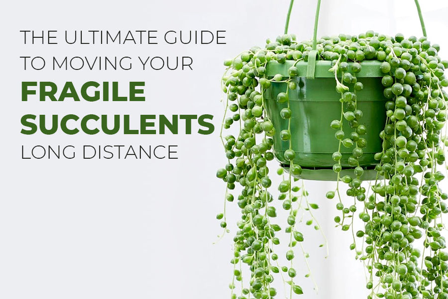 The ultimate guide to moving succulent for long distance