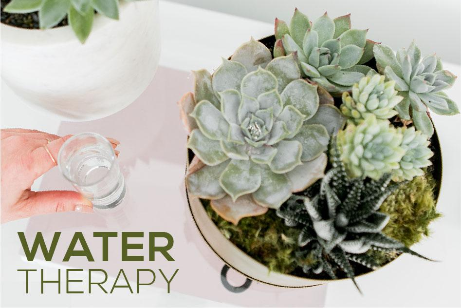 Water Therapy for Succulents