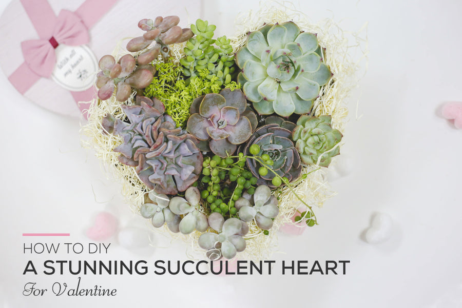 How to DIY a Stunning Succulent Heart for Valentine, Types of Succulents for Valentine's Day, Succulent Valentines Day Arangements in Heart Shape Boxes