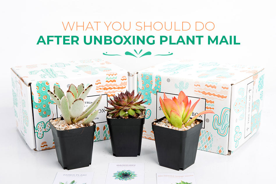 What you should do after unboxing plant mail