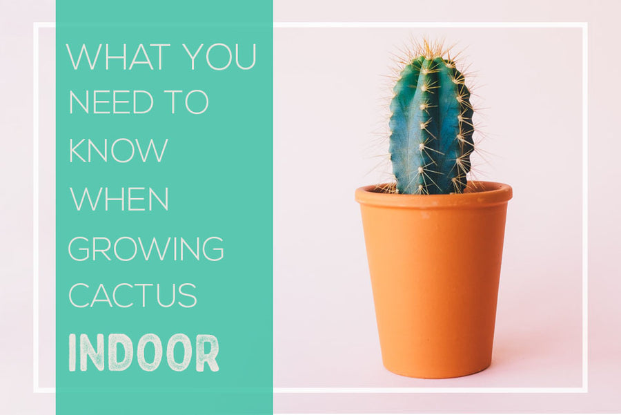 What you need to know when growing cactus indoor