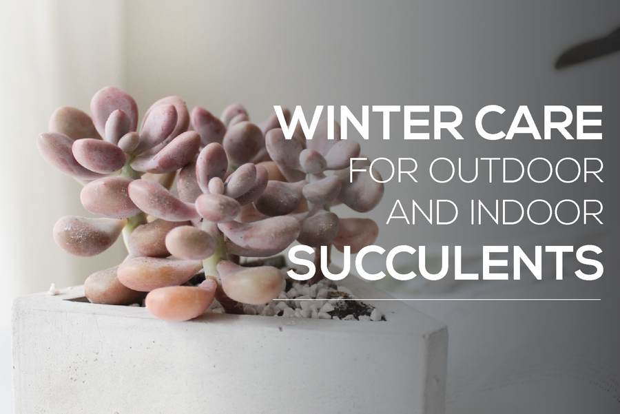Indoor & Outdoor Winter Care Guide for Succulents
