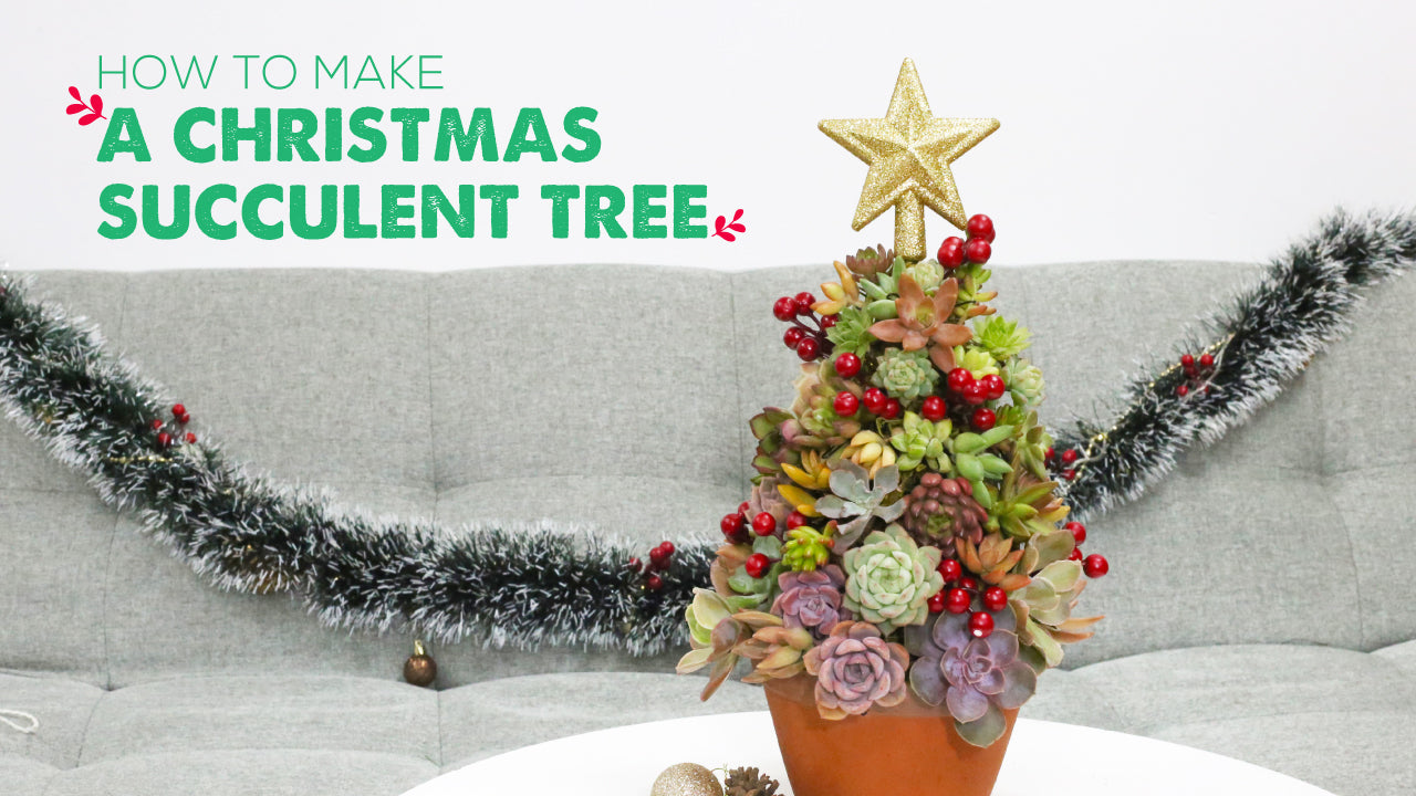 How to make a Christmas Succulent Tree, Christmas Decoration Ideas, DIY Succulent Decoration Ideas