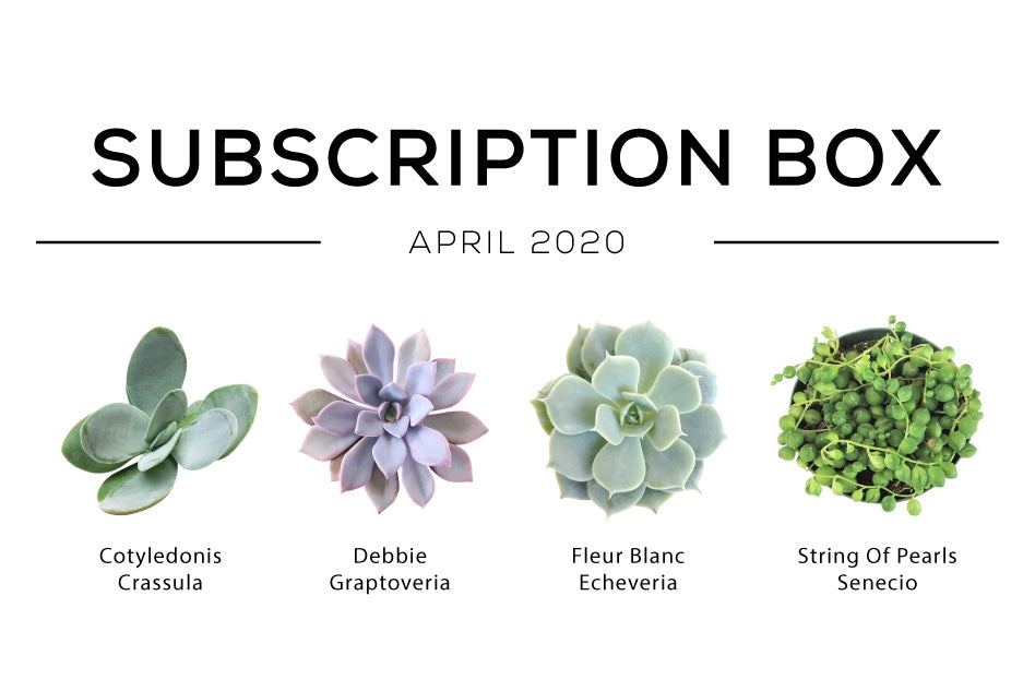 Succulents Box April Care Guide