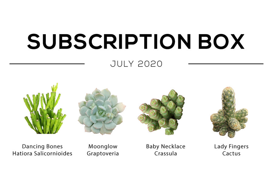 July 2020 Succulent Subscription Box Care Guide