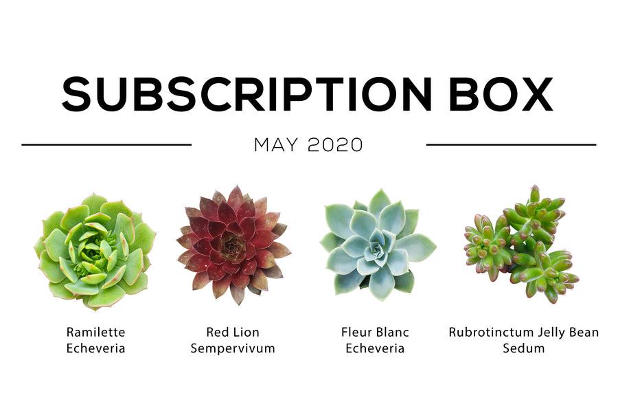 Succulents Subscription box monthly, Types of succulents, Succulents for sale, Succulent subscription gift monthly