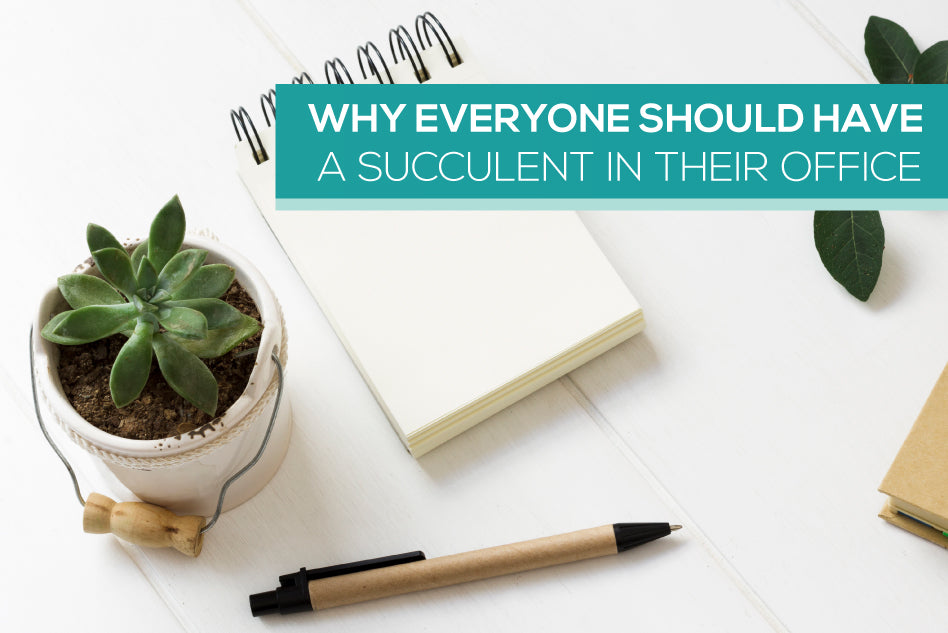 Why everyone should have a succulent in their office