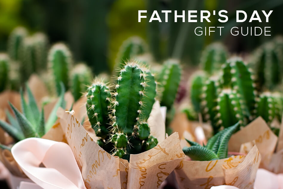 Succulents for Father's Day Gift Guide