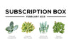 Succulents Box February 2019 Succulent Subscription Box