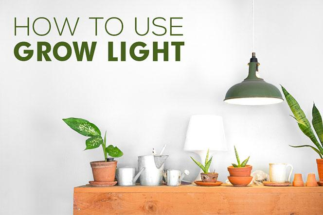 How To Use Grow Light For Your Indoor Succulents Succulents Box