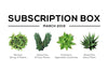 SUCCULENTS BOX MARCH 2019 CARE GUIDE
