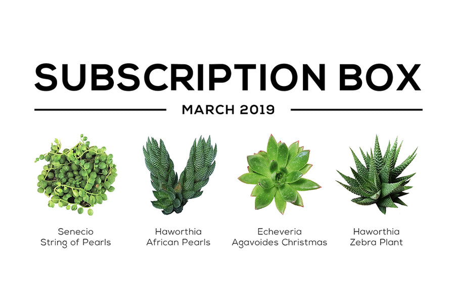 Subscription Box with Care Guide