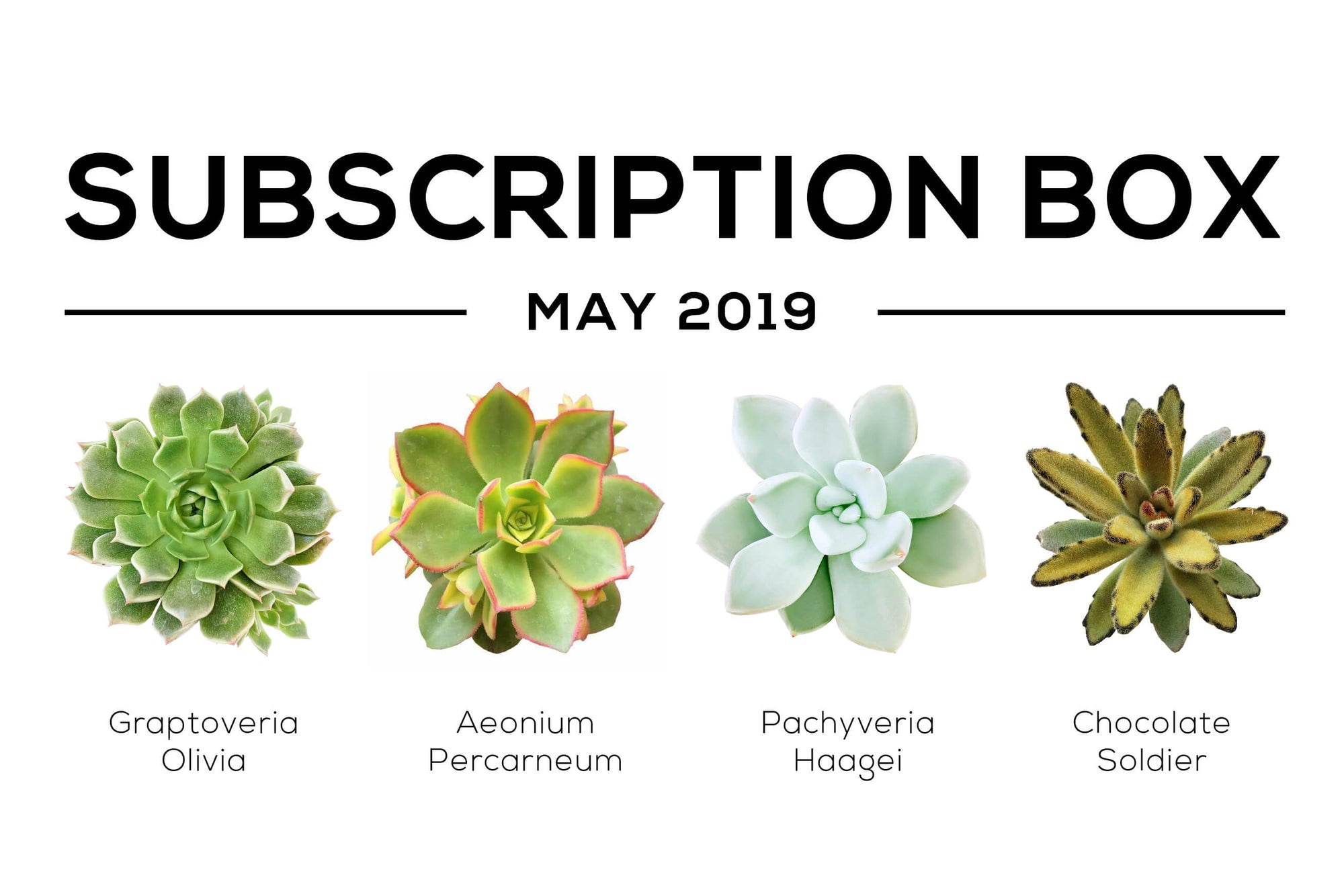 Succulent Subscription Box