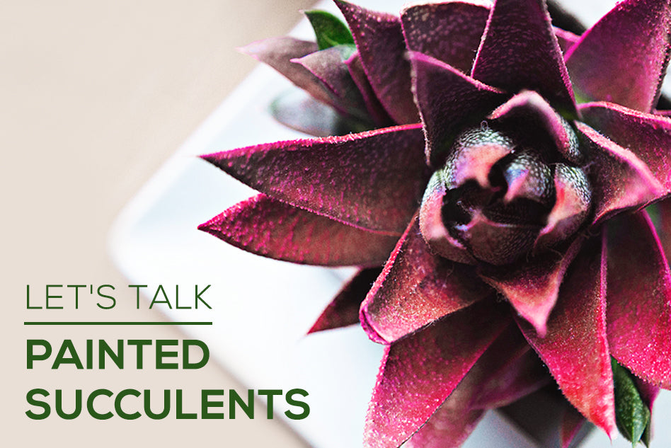 Painted Succulents - Trendy or Harmful