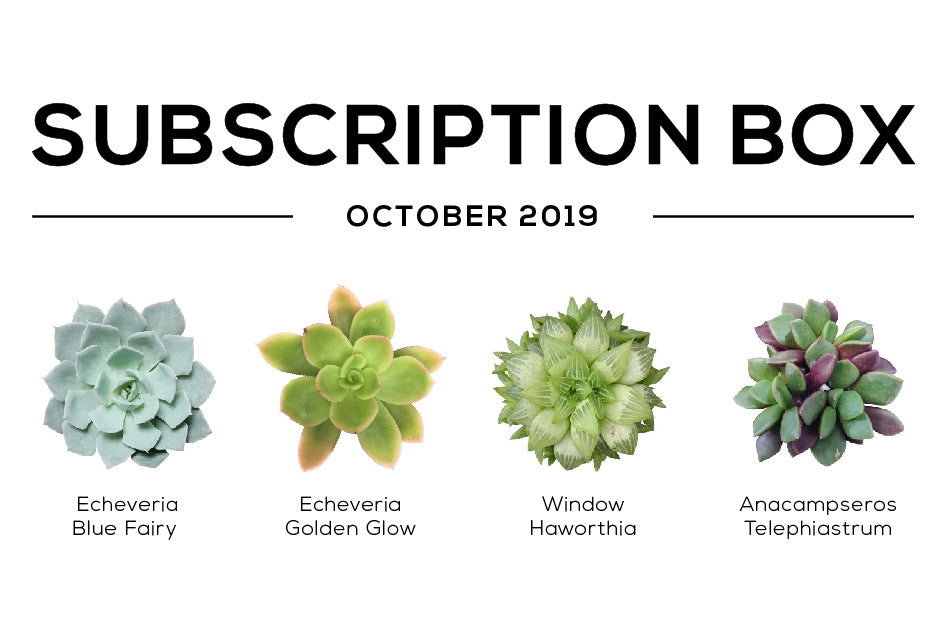 SucculentsBox October care guide