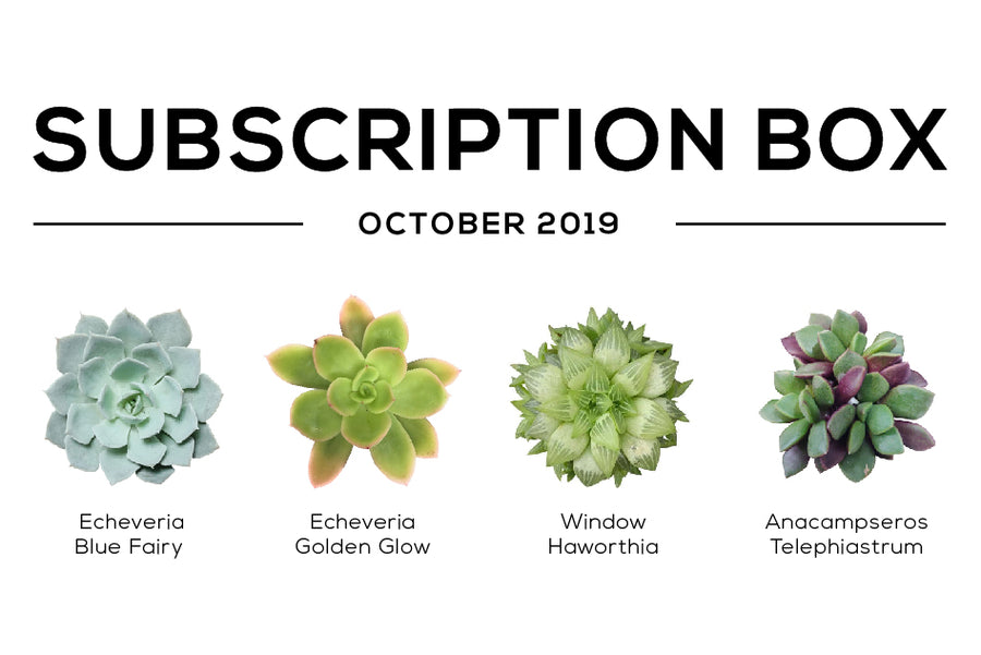 Succulents Subscription Box October 2019 Care Guide