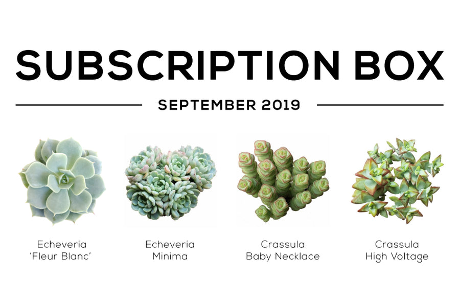 Succulents Box September 2019 Care Guide