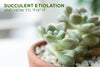 Succulent Etiolation and How to