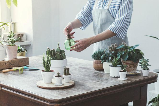 Succulent Watering Tips