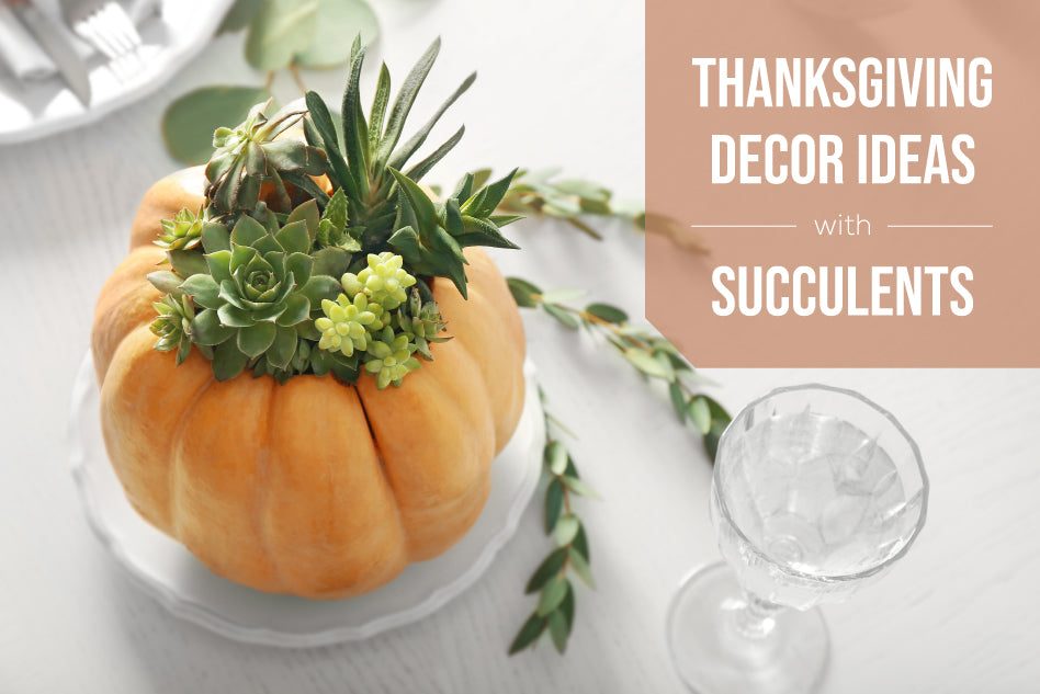 Thanksgiving Decor Ideas with Succulents, Succulents for Thanksgiving, Thanksgiving Gift Ideas, Thanksgiving Succulents Gift, Growing Succulents for Thanksgiving, Easter Succulents Gift Ideas
