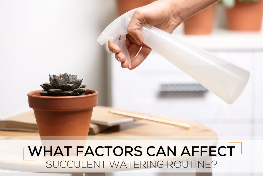 What factors can affect succulent watering routine?
