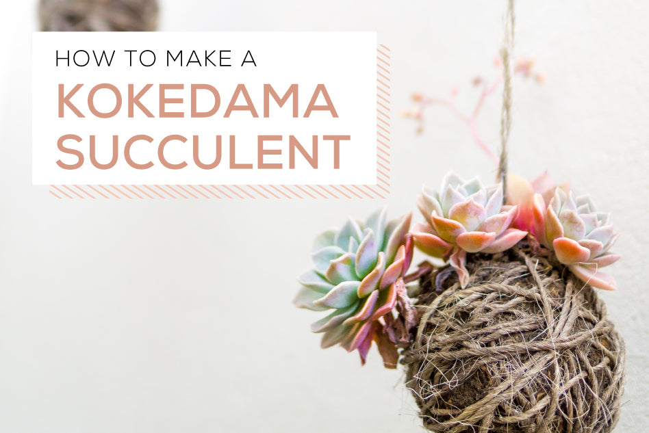 DIY a Simple Succulent Kokedama, How to make a kokedama succulents, How to make a succulent ball