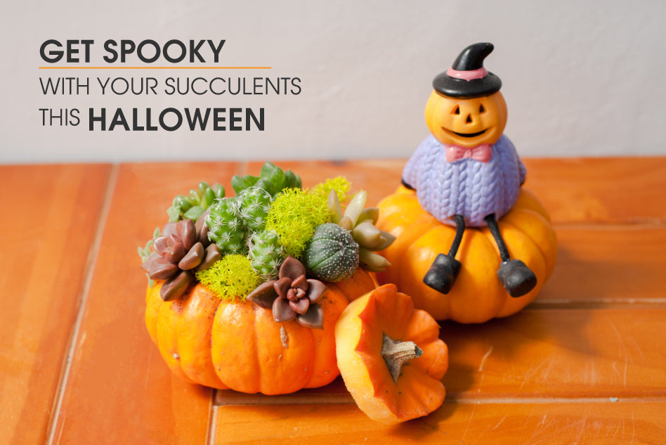 Get spooky with your succulents this Halloween