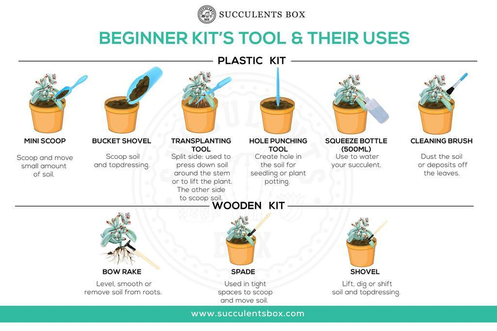 Succulent Gardening tool and how to use them