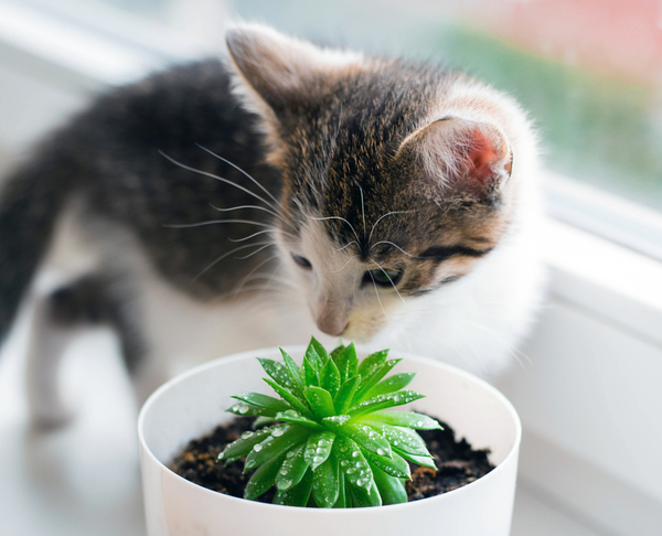 How to keep your pets away from your succulents