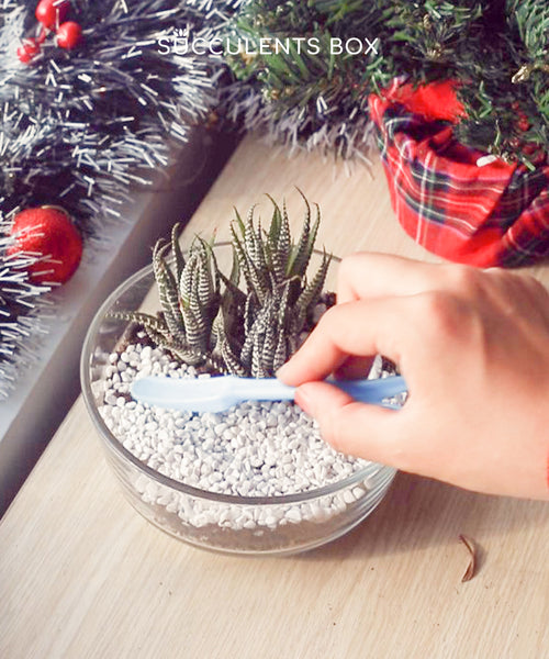 How to make this DIY Christmas Succulent Centerpiece