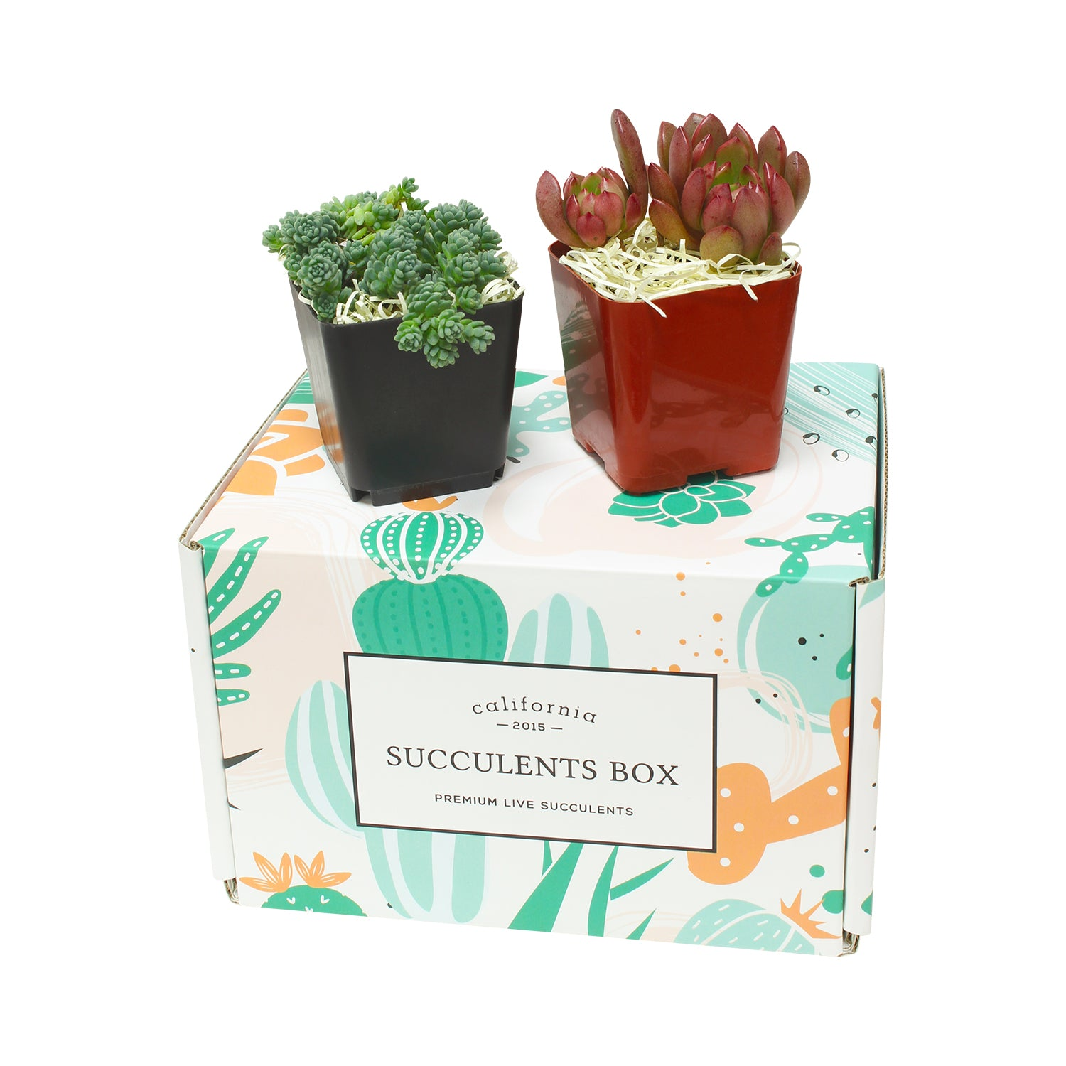 Succulent and Cactus Subscription Boxes monthly