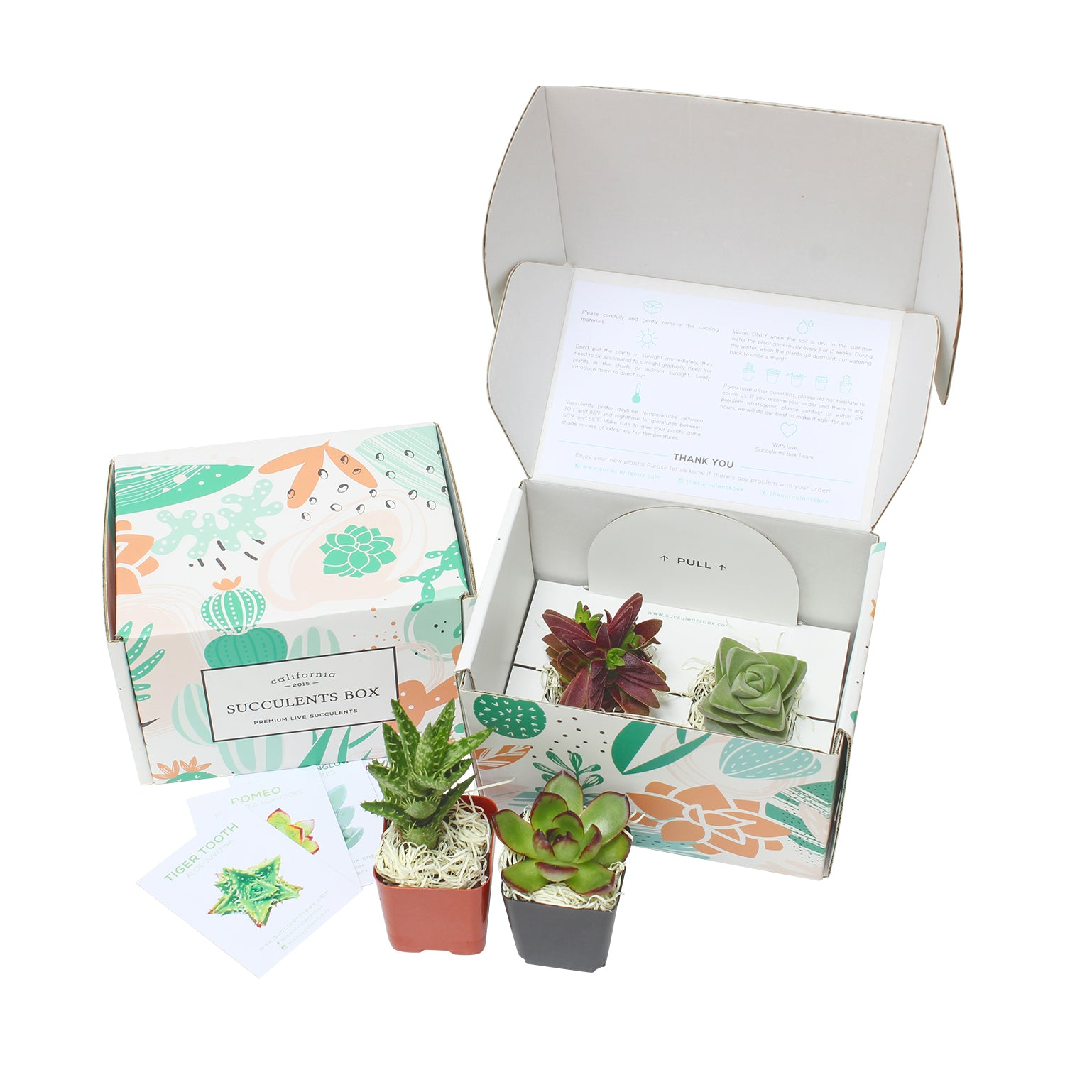 Premium Succulent Subscription Boxes delivered monthly