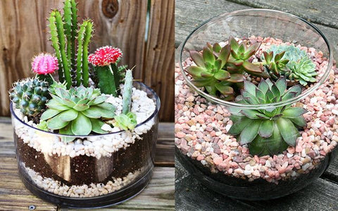 Pot for Succulents