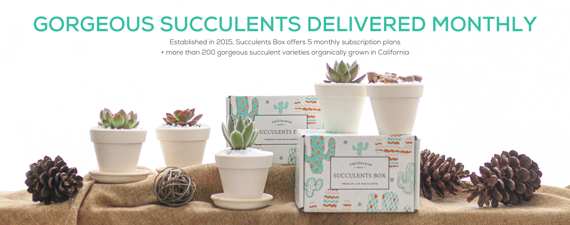 Succulents Subscription Delivered Monthly and Gorgeous Succulent Varieties Organically Grown in California