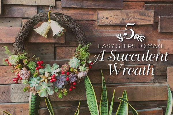 5 Easy Steps to DIY Christmas Wreath with Succulents