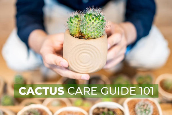 Cactus Care Guide 101, How to care for cactus plant