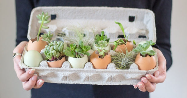 Succulents in Egg Shell planter, Easter Decoration Ideas