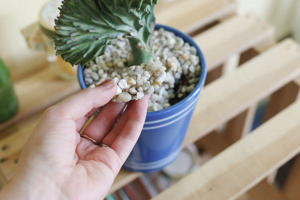 How to care for Cactus Coral