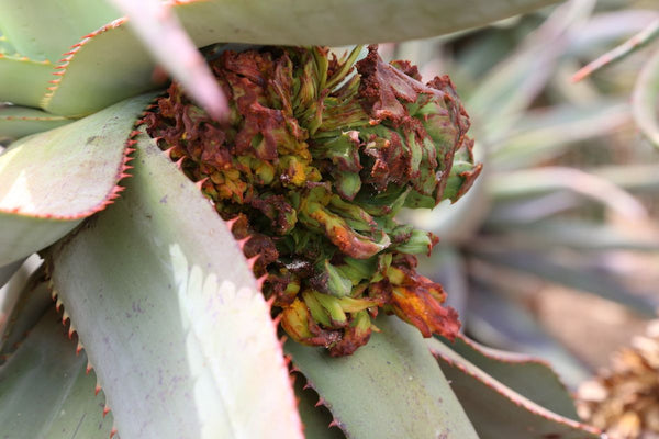 HOW TO TELL IF YOUR SUCCULENT LEAVES ARE HEALTHY & THEIR TREATMENTS