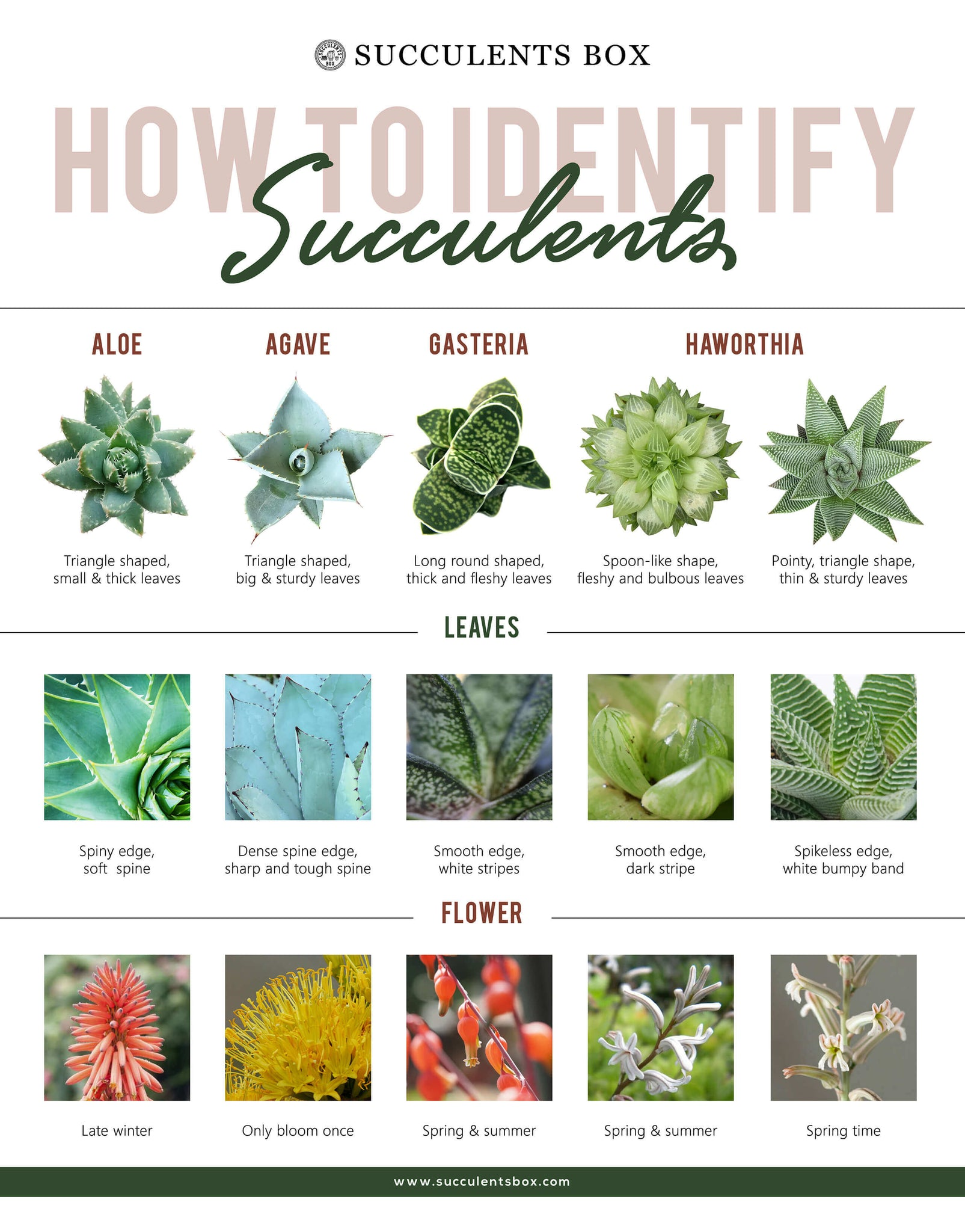 How To Identify Different Types Of Succulent Part Ii Aloe Agave Gas Succulents Box