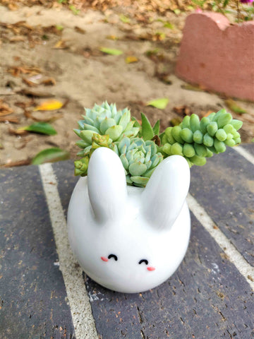 Succulent in Bunny planter, Home Decoration Ideas, Easter Succulent Decoration Ideas