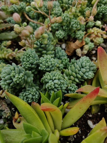How to create a succulent garden