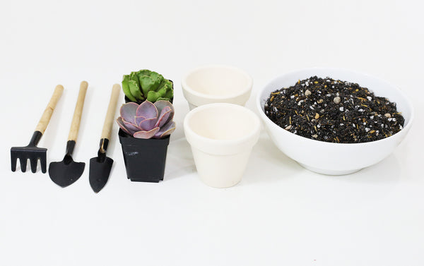 Overwatered Succulents Treatment, How to save an overwatered succulent, Signs of underwatered succulents, Underwatered vs overwatered succulent, How to fix overwatered succulent, How to revive a dead succulent, Succulent leaves soft and wrinkly