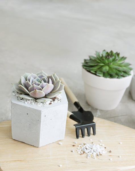 how to care for your succulents indoor