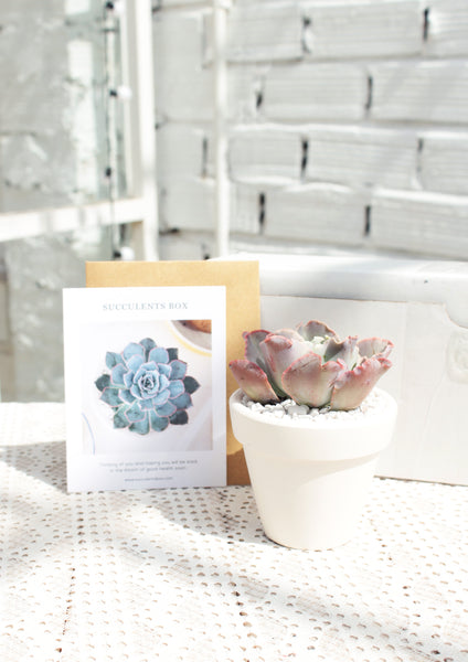 How to fix Succulent etiolation - Echeveria Ruffles