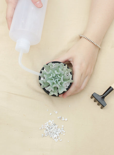 Watering bottle 500 ml for succulent plants